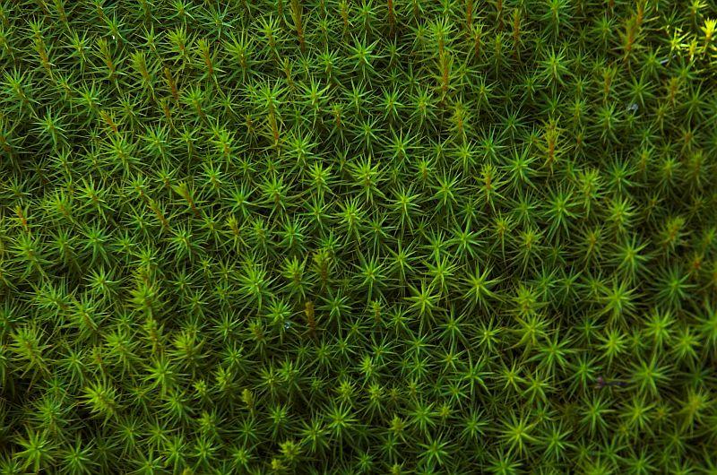 Estrelles Verdes