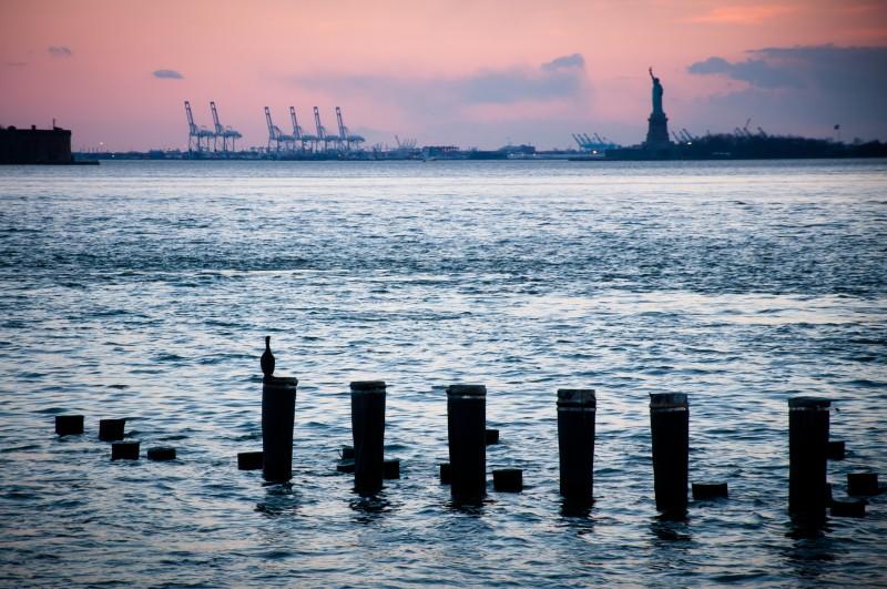 Corb marí i Estàtua de la Llibertat des de Brooklyn - Cormorán y Estatua de la Libertad desde Brooklyn